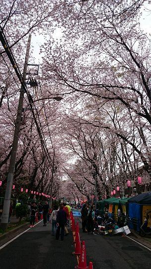 SakuraFesOkubo2016c.jpg