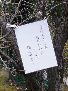 mikuji.jpg