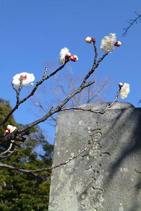 nakayama0201b.jpg