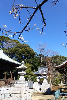 nakayama0201c.jpg