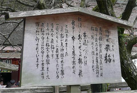 tobiume_fuda480.jpg