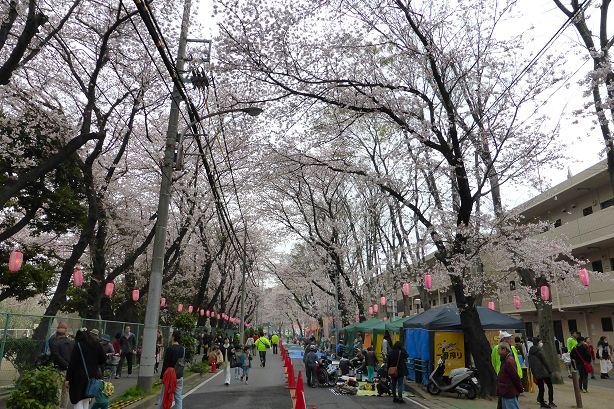 SakuraFesOkubo2016e.jpg