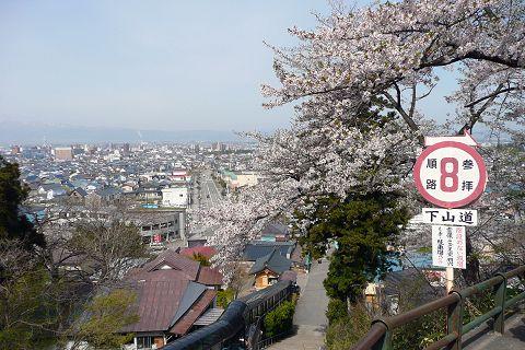 iimorisakura.jpg