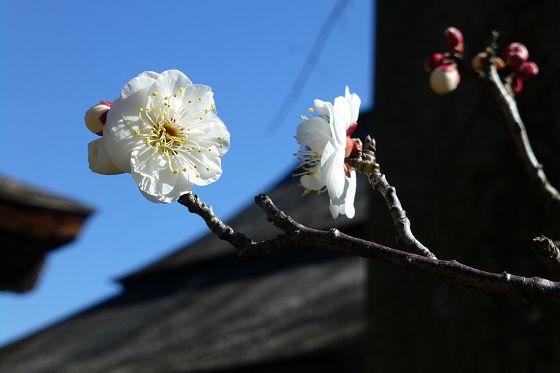 nakayama0201a.jpg
