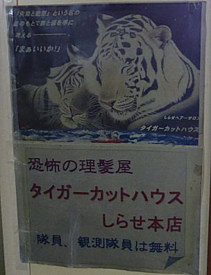 tiger304b.jpg