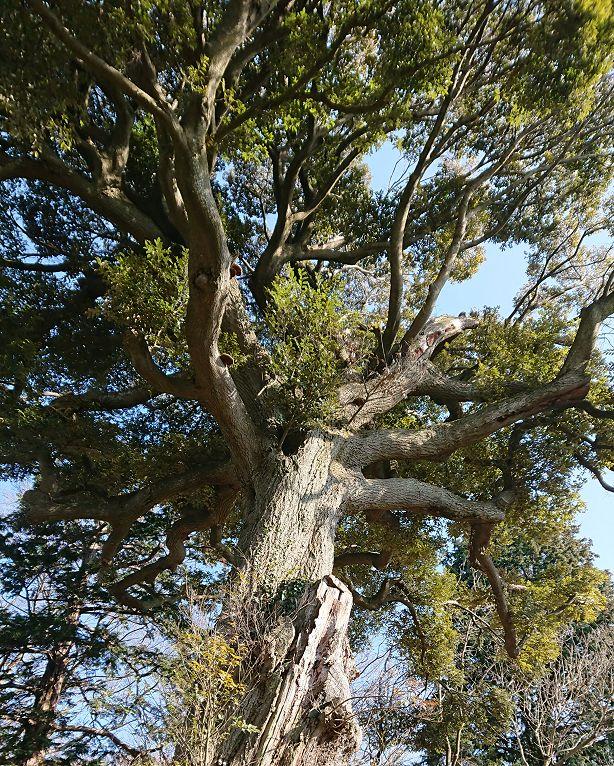 tree640.jpg